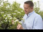 Ross Goatham with pear blossom at Mierscourt Farm in Rainham, part of the firm's network producers across Kent