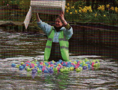 AND THEY'RE OFF: Sian Pettman releases the ducks for one of the Kingsmead field races